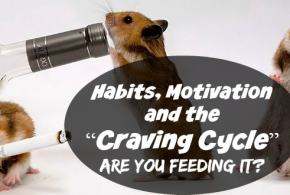 "The Sugar ""Craving Cycle"": Are you feeding it?"