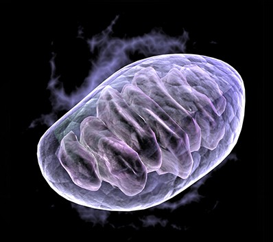 Mitochondria: The Power House of our Cells