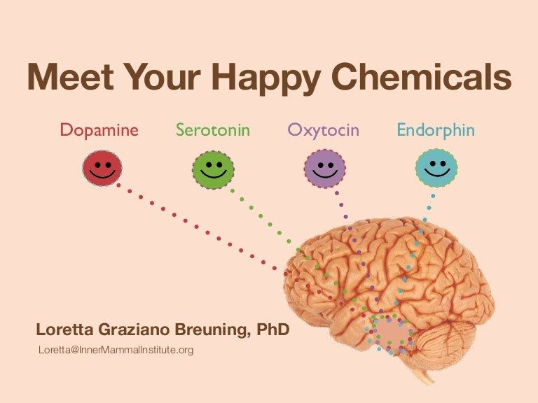 Meet your happy brain chemicals