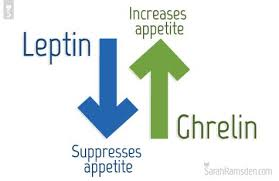 leptin suppresses appetite and ghrelin increases appetite