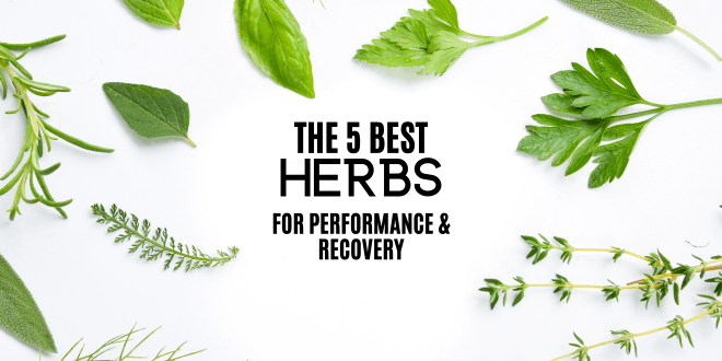 5 Herbs that Can Improve Your Physical Performance and Recovery